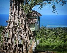 Lupe Sina Treesort in Samoa has the coolest entrance to a treehouse ever. Checkout the stairs intertwined in the roots of the banyan tree! Located on the hills of Tiavi among a rain forest of Upolu http://ift.tt/233zg19 #lupesina #treesort #samoa #roots #tiavi #rainforest #treehotel #upolu #southpacific #banyan #island #islandhotel by treehousepix