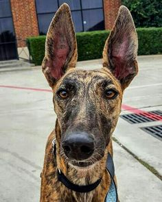 """Hope you're doing well..From your friends at phoenix dog in home dog training""""k9katelynn"""" see more about Scottsdale dog training at k9katelynn.com! Pinterest with over 21,400 followers! Google plus with over 345,000 views! You tube with over 500 videos and 60,000 views!! LinkedIn over 10,600 associates! Proudly Serving the valley for 12 plus years! now on instant gram! K9katelynn"""