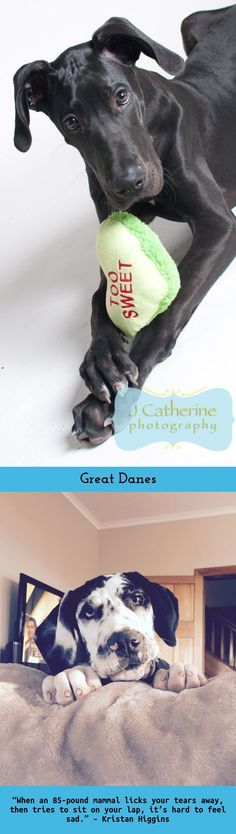 """""""Never trust a person that doesn't love dogs."""" #greatdane"""