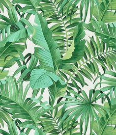 Transform your home into a vacation with tropical print wallpaper! Tropical wallpaper classically features palm trees, ocean and beach wildlife, and all the elements you might find on a dream vacation to the tropics. Tree Wallpaper White, Palm Leaf Wallpaper, Tropical Wallpaper, Botanical Wallpaper, Print Wallpaper, Wallpaper Roll, Peel And Stick Wallpaper, Pattern Wallpaper, Wallpaper Jungle
