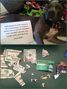 Dog Shaming - I guess it's homemade gifts this year