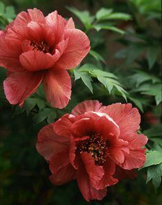 Lisa Hubbard Photography #FlowerShop
