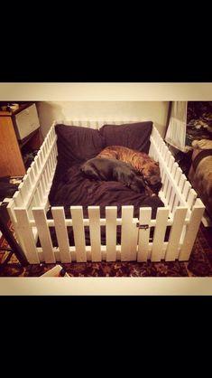 Cute Dog Beds Idea
