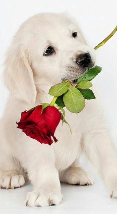 Cute Dog Wallpaper, Camera Wallpaper, Animals Beautiful, Cute Animals, Puppy Valentines, Dolphin Art, Beautiful Rose Flowers, Cute Dogs And Puppies, Pretty And Cute