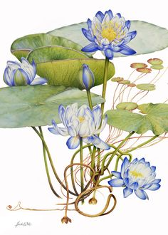 Blue Water Lily Botanical Canvas Print