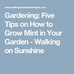 Gardening: Five Tips on How to Grow Mint in Your Garden - Walking on Sunshine
