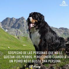 Sospecho de las personas que no le gustan los perros, pero confío cuando a un perro no le gusta una persona. My Love, Frases, Photos, Dogs, Animals, My Boo