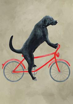 Labrador Print labrador Illustration Art Poster by CocktailZoo Dog Paintings, Acrylic Paintings, Bike Drawing, Bicycle Print, Funny Prints, Bike Art, Illustrations And Posters, Art Club, Dog Art