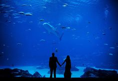 Aquarium Weddings - The Georgia Aquarium in Atlanta, GA - http://www.wpja.com/contests/52-2011-q4-contest/19-creative-portrait.html#16