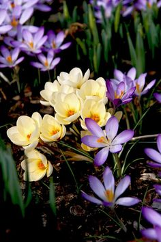 Spring garden prep checklist portadas pinterest spring crocus 2 by thomas rttgen on mightylinksfo