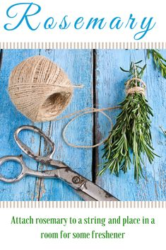 Hang up bunches of fresh rosemary and rub fresh leaves over counter tops, tables, and windowsills.