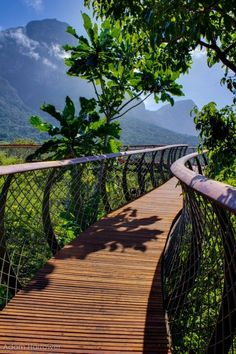 The Boomslang canopy walkway at Kirstenbosch Botanical Garden, Cape Town, South Africa.