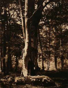 Gustave Le Gray, Tree Trunk, 1856, albumen print, Winsberg Collection, New York