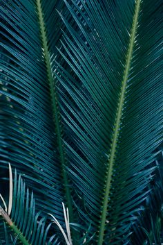 blues and greens - love this color so much... Sego palm
