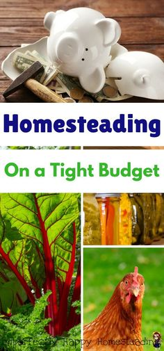 20 Tips to Help You Homestead on a Tight Budget in your backyard or on acres! Homesteading on a Budget!