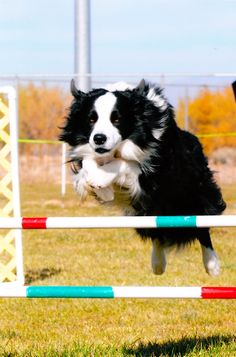 Mesmerizing Training Your Dog Proven, Useful Hints And Tips Ideas. Remarkable Training Your Dog Proven, Useful Hints And Tips Ideas. Cute Dog Costumes, Dog Halloween Costumes, All Dogs, Best Dogs, Dog Corner, Dog Agility, Cat Paws, Cute Dogs, Awesome Dogs