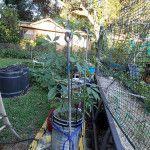 5 Gallon Bucket Gardening: Seven Ways to Reuse Plastic Buckets for Growing Food