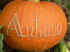 Pumpkin, scratched while growing leaves a BEAUTIFUL scar. This has been such fun with all the grandkids names.