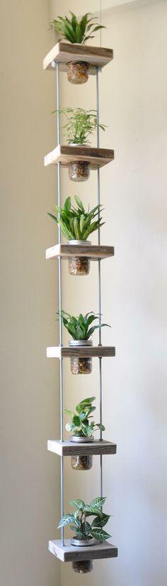 Moi qui n'aime pas trop les plantes, présentées comme ça je trouve ça top!