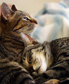 Forever friends  #cat  http://www.annabelchaffer.com/