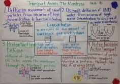 Biology Review, Biology Lessons, Science Biology, Teaching Science, Life Science, Cell Biology, Biology College, High School Biology, Science Anchor Charts