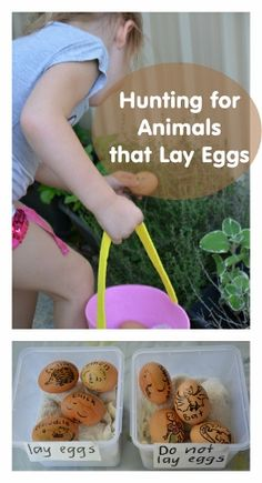 Easter Activity: Hunting for Animals that Lay Eggs | Wildlife Fun 4 Kids