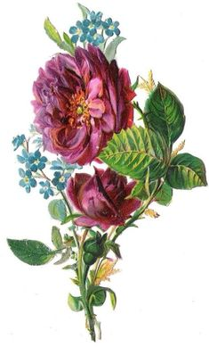 Scraps - Victorian Die Cut - Victorian Scrap - Tube Victorienne - Glansbilleder - Plaatjes: rose with other flowers