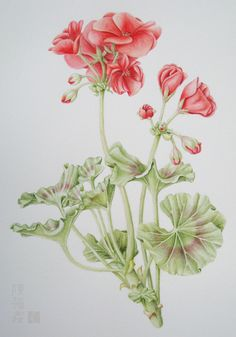 Vintage Geraniums I would like to do this with thread painting. I love geraniums.