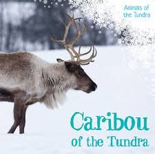 Caribou—also known as wild reindeer—live in the cold, snowy tundra, where food is scarce. Their specially shaped hoofs help them walk on snow and dig for the food underneath it. What do caribou eat? How do they avoid dangerous predators? Readers will find the answers to these and other questions in this engaging text, which supports basic elementary science curricula. Science Curriculum, Elementary Science, Predator, Social Studies, Geography, Reindeer, Canada, Community, Snow