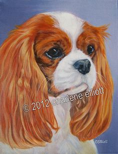 "14"" x 18"" Sunny www.charleneelliott.com - - Charlene does very nice Cavalier artwork....AND...she does commissions!!!"