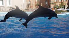 Поющие дельфины!