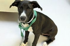 Leroy: Adorable retriever mix pup is out of time at high-kill SC shelter