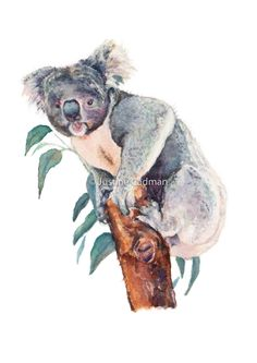 Australian Koala Print of Watercolour painting - Koala Watercolour - Koala painting - Australian wildlife - Wall Art - Nursery Art Print Watercolor Pencil Art, Watercolor Animals, Watercolour Paintings, Nursery Paintings, Wildlife Paintings, Nursery Art, Art Inspo, Fine Art Prints, Original Paintings