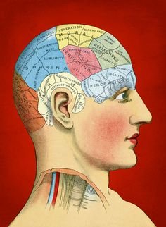 Phrenology [Infographic] | Phrenology is the study of the shape of skull as indicative of the strengths of different faculties. It was an antecedent of the modern neuroscience and is abandoned now.