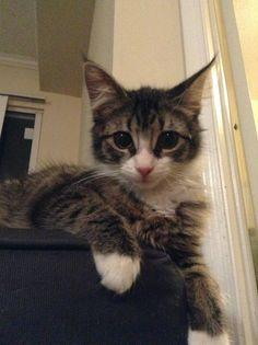 ラブリー-KittyCats、fuckyeahfelines:これはちょうど3匹の猫の一つである...