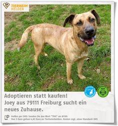 Joey hat so einige Besitzerwechsel hinter sich und sucht im Tierheim Freiburg nach einer hundeerfahrenen Person.  http://www.tierheimhelden.de/hund/tierheim-freiburg/boxer_mix/joey/9402-0/  Mavis hat einen auferlegten Leinen- und Maulkorbzwang, da er verhaltensauffällig geworden ist. Er ist ein unsicherer Hund, der ein ruhiges Zuhause und souveräne Besitzer braucht. Hat er