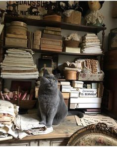 Sundays are for exploring the den of antiquity 😸 Lily Pond, Hello Everyone, Explore, Antiques, Gallery, Cats, Animals, Beautiful, Den