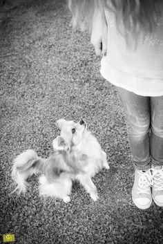 Hund, Chihuahua, Mädchen, dog, girl, schwarz weiss, black and white