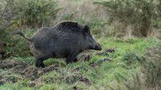 La chasse est ouverte en Limousin !