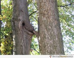 Scandalous photo of two trees making out in the forest.