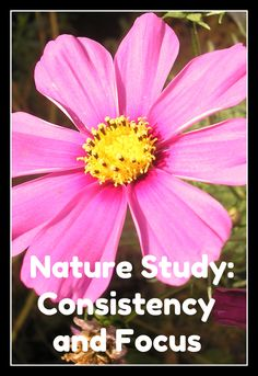 Handbook of Nature Study: Nature Study: Struggling With Consistency and Focus