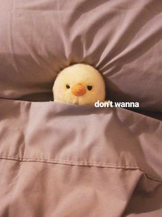 Discovered by ️️ -ˏˋ m. Find images and videos about cute, funny and bed on We Heart It - the app to get lost in what you love. memes Image about cute in pollín reacts by ️️ -ˏˋ 🐣 Cute Love Memes, Funny Cute, Haha Funny, Animal Memes, Funny Animals, Cute Animals, Memes Humor, Reaction Pictures, Funny Pictures