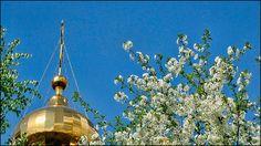 Вишня цветет. Крылатские холмы./3673959_9 (700x393, 134Kb)