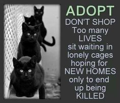Knowing what happens to animals who don't get adopted, why in the world would you still buy from a breeder/store?!