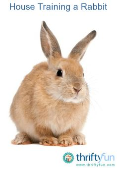This guide is about house training a rabbit. Having a rabbit as a indoor pet can be messy, but they like to be clean.
