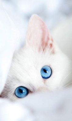 Sleepscruffmedicine cat More