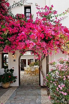 Bougainvillea. I would extend the wall between patio and carport, so the patio is cozier and have an arched entryway like this one going to the carport. On the poolside I would leave the carport wall as it is now