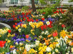 Driving through Salt Lake City on a cloudy day over Easter weekend, we passed by the most spectacular display of spring flowers. The flower...