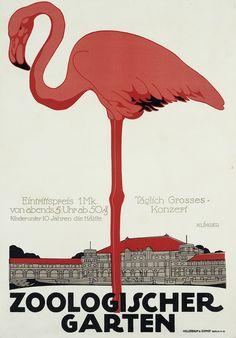 Flamingo, Zoologischer Garten, 1910