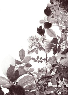 "Saatchi Art Artist Nives Palmić; Drawing, ""ROSES IN TWILIGHT"" #art"